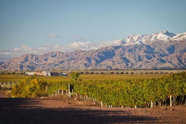 Sunny day in Gran Vineyard Estates - Mendoza, Argentina