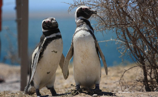 Penguins Courtesy of The Ecologist