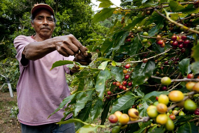 costa-rica-farmer-coffee-growing-quality